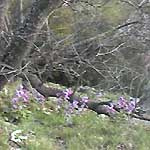 wild flowers in Metoera